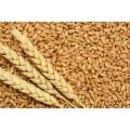 Pšenični izdelki